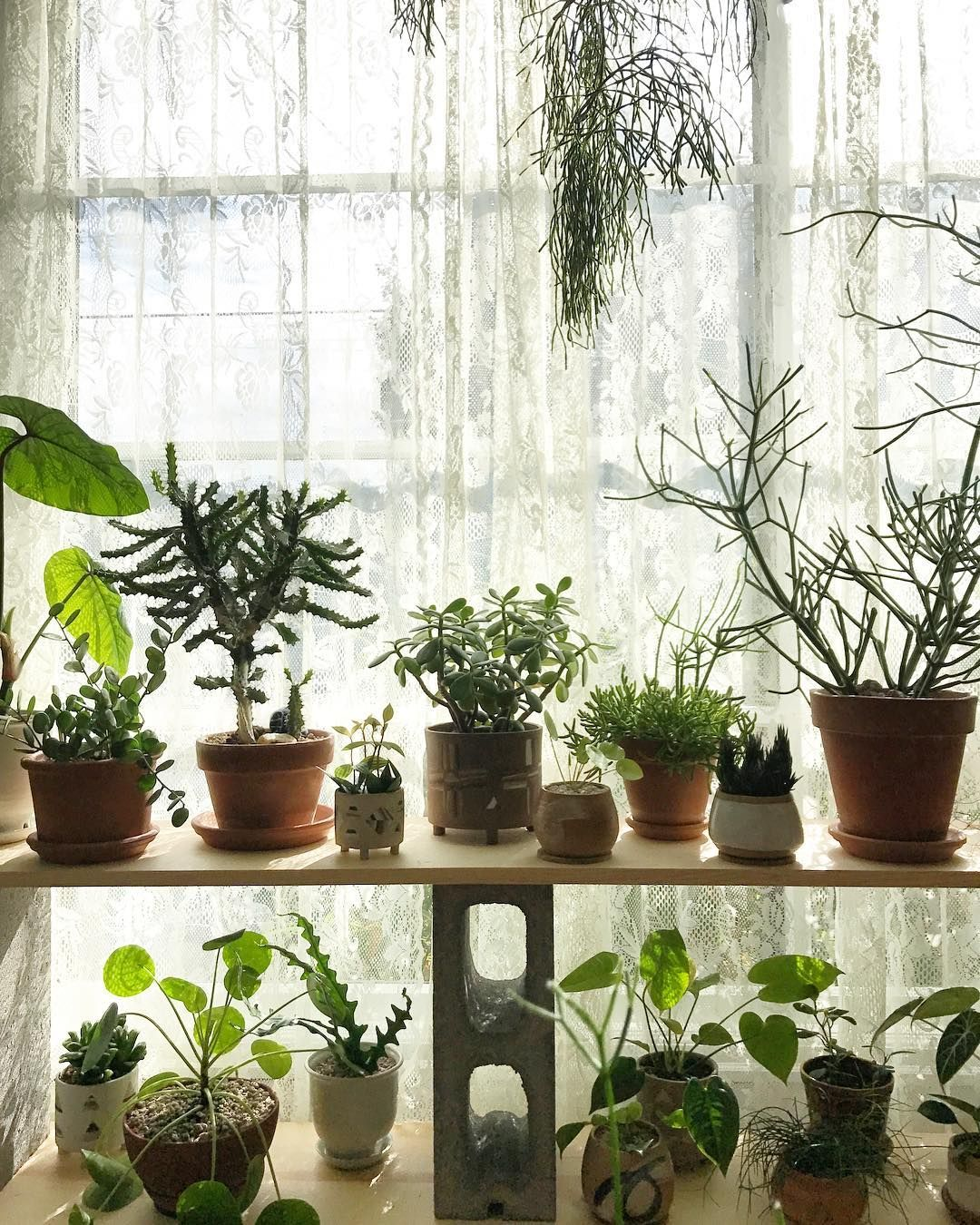 Buy These 6 Bedroom Plants and Get the Best Sleep Ever