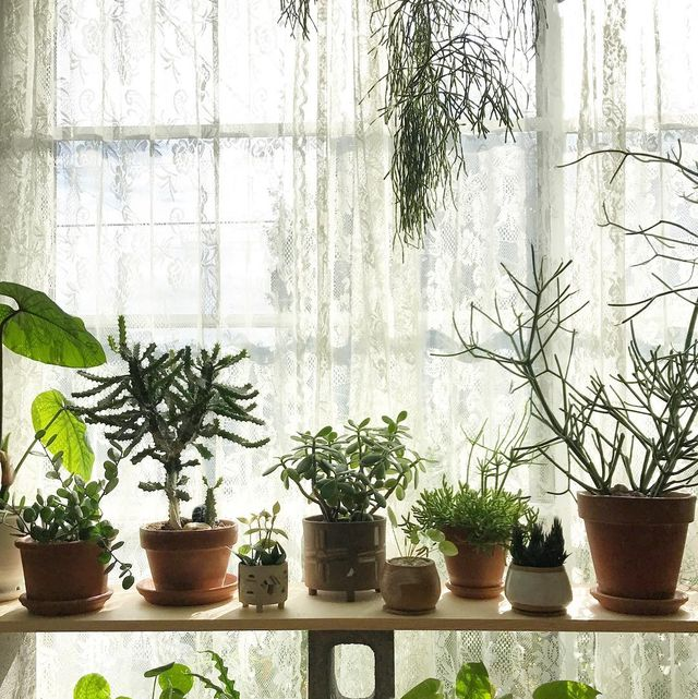 These Bedroom Plants Will Give You The Best Sleep Ever
