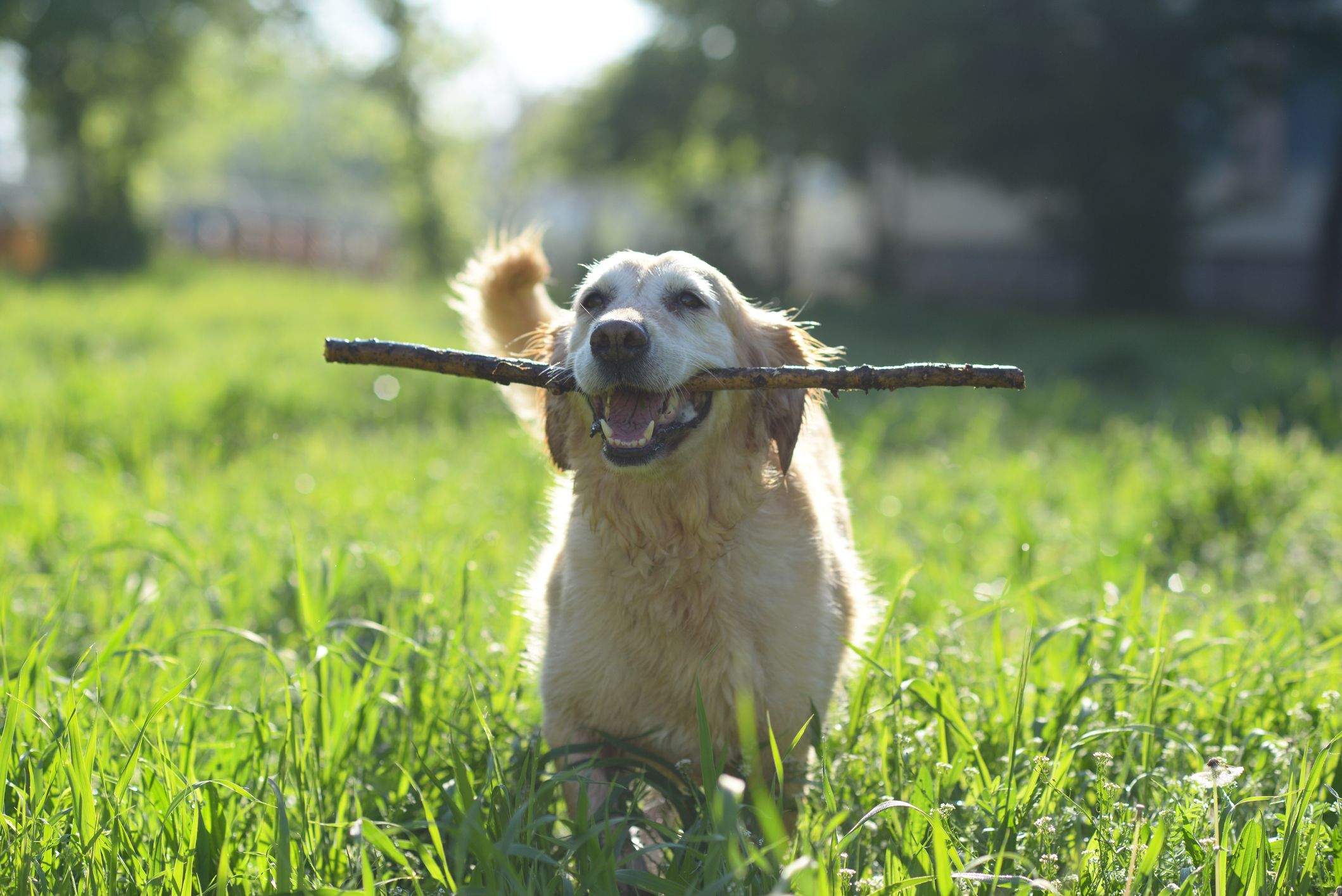 6 dog games great for training and bonding