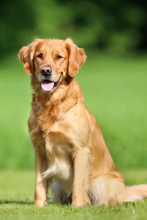 20 Best Dog Breeds For Kids Good