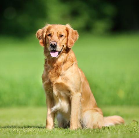 40 Best Medium Sized Dog Breeds List