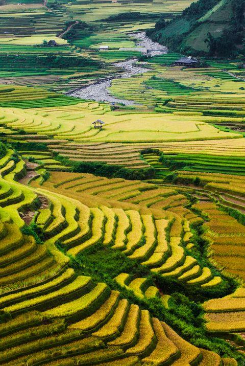 Золотые рисовые террасы в Северном Вьетнаме