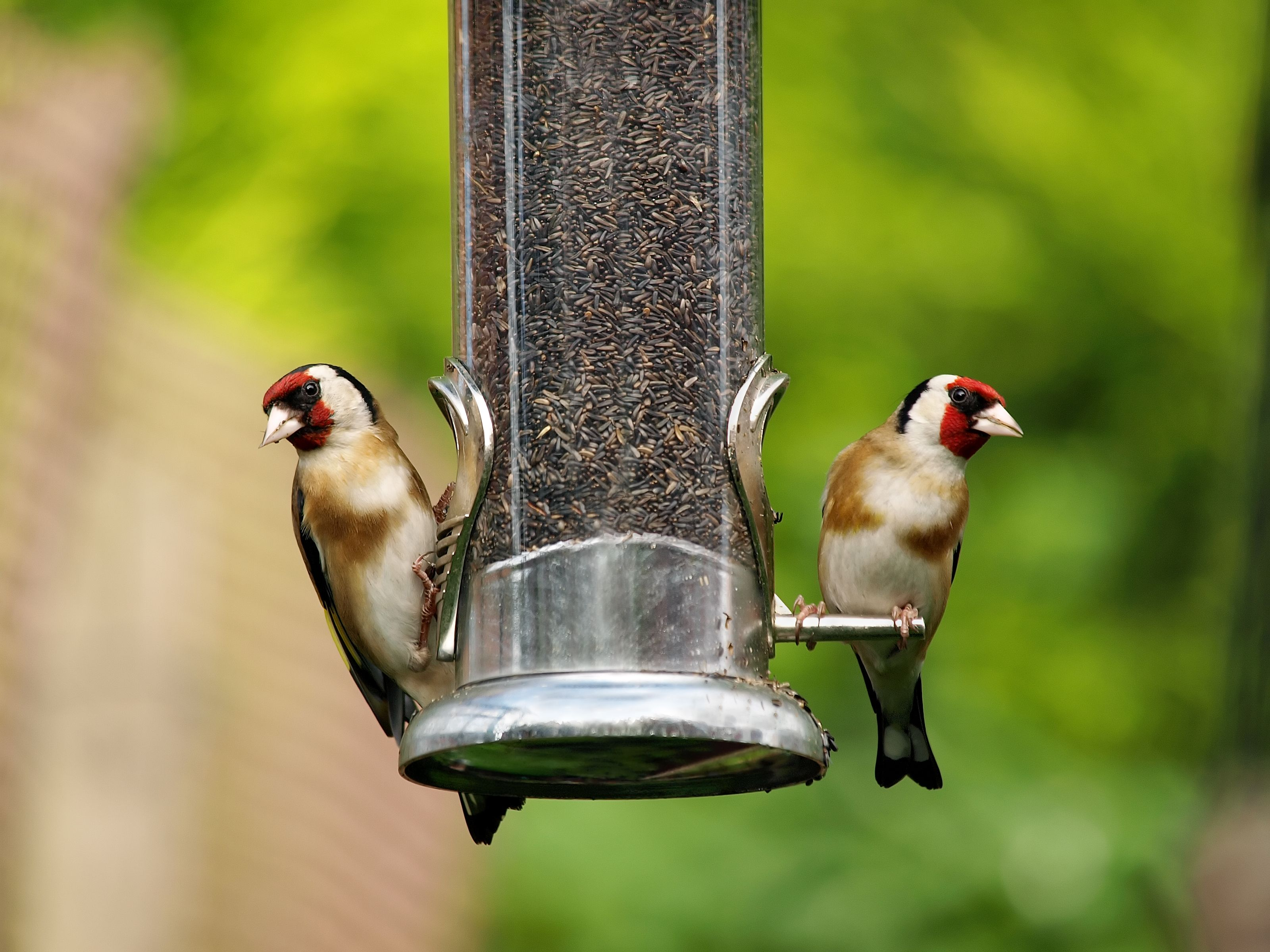 British households are being urged to feed birds using kitchen scraps