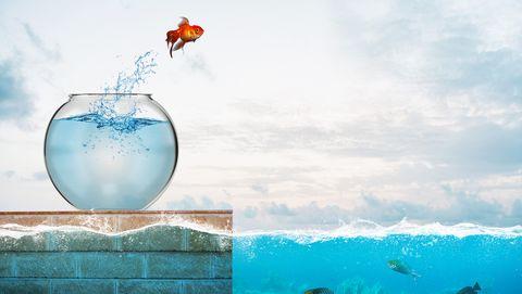 goudvis springt in zee