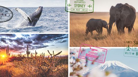 Wildlife, Nature, Elephant, Natural landscape, Natural environment, Elephants and Mammoths, Adaptation, Sky, Organism, National park,
