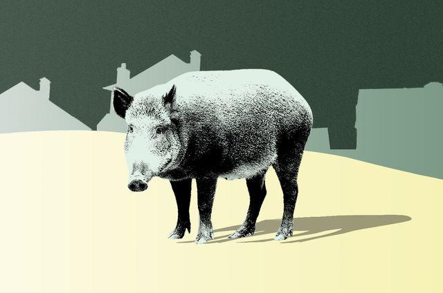 Snout, Terrestrial animal, Grey, Wildlife, Suidae, Illustration, Livestock, Animation, Graphics, Stock photography,