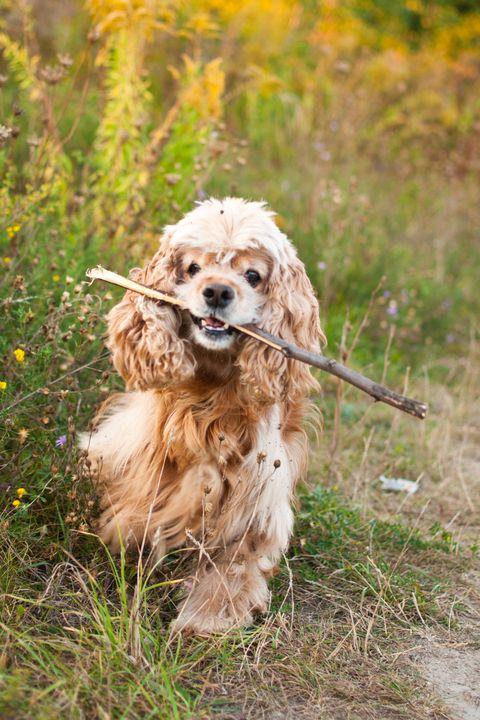 Monet unique dog names