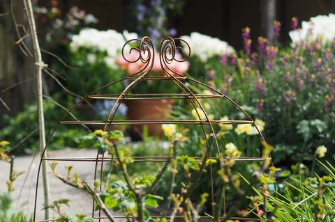 Chelsea Flower Show 2019 - Product of the Year