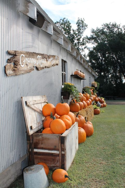 granny maes pumpkin patch best pumpkin patch