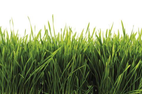 Best Types Of Grass How To Grow Grass