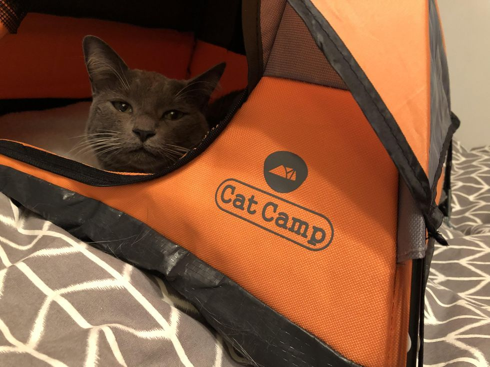 Cat Camp Is the Tent for Adventure Kitties Who Don't Actually Go Outside