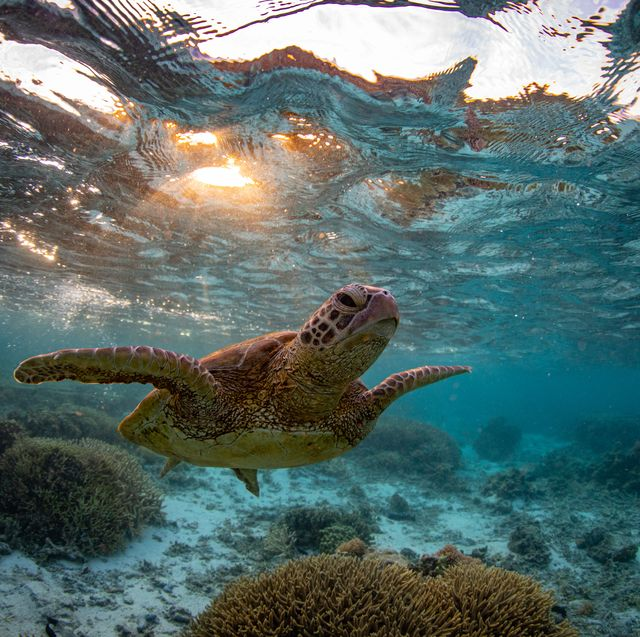 great barrier reef underwater landscapes and wildlife