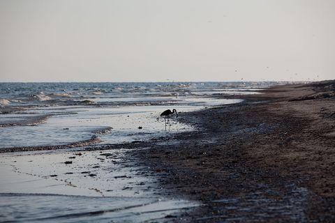 USA - Deepwater Horizon Disaster - Oil Lands on Bon Secour National Wildlife Refuge