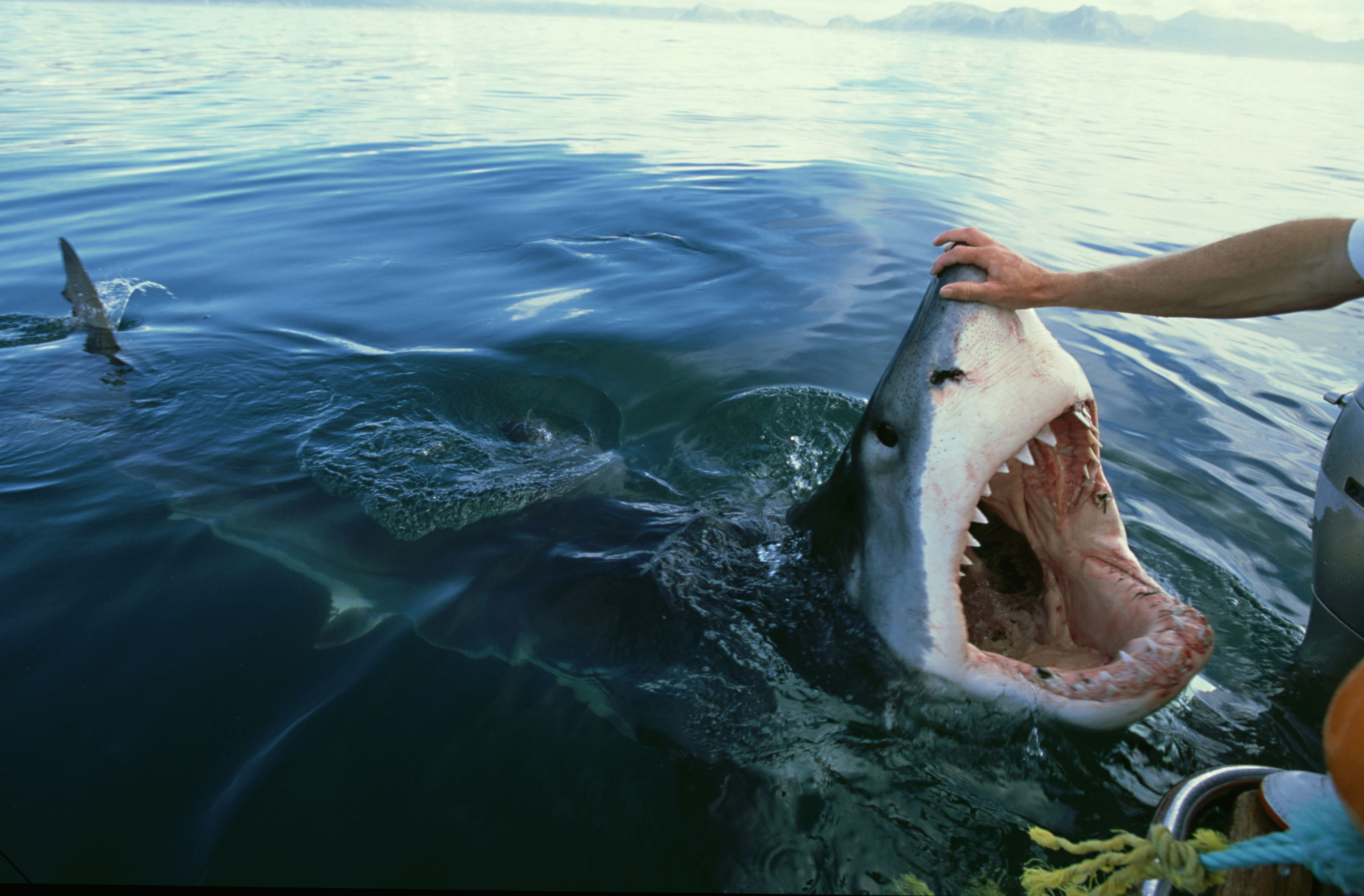 11 Close Encounters of the Shark Kind