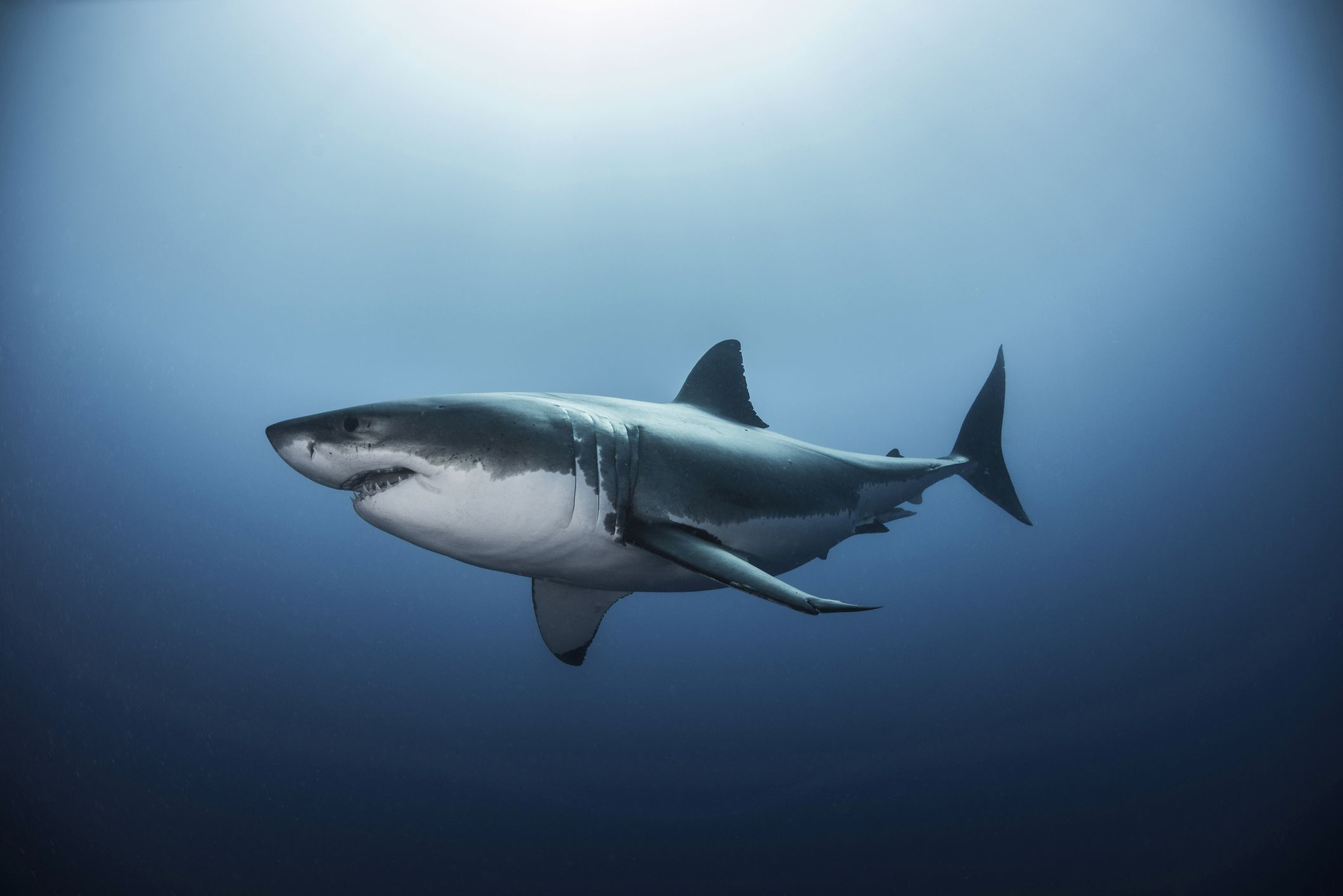 Could Shark DNA Help Fight Cancer in Humans?