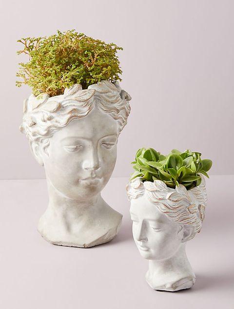 modern planters plant pot