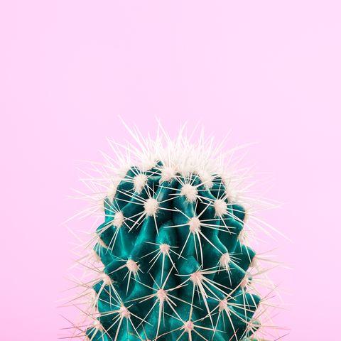 Green cactus on pastel pink background. Pop art minimalist design