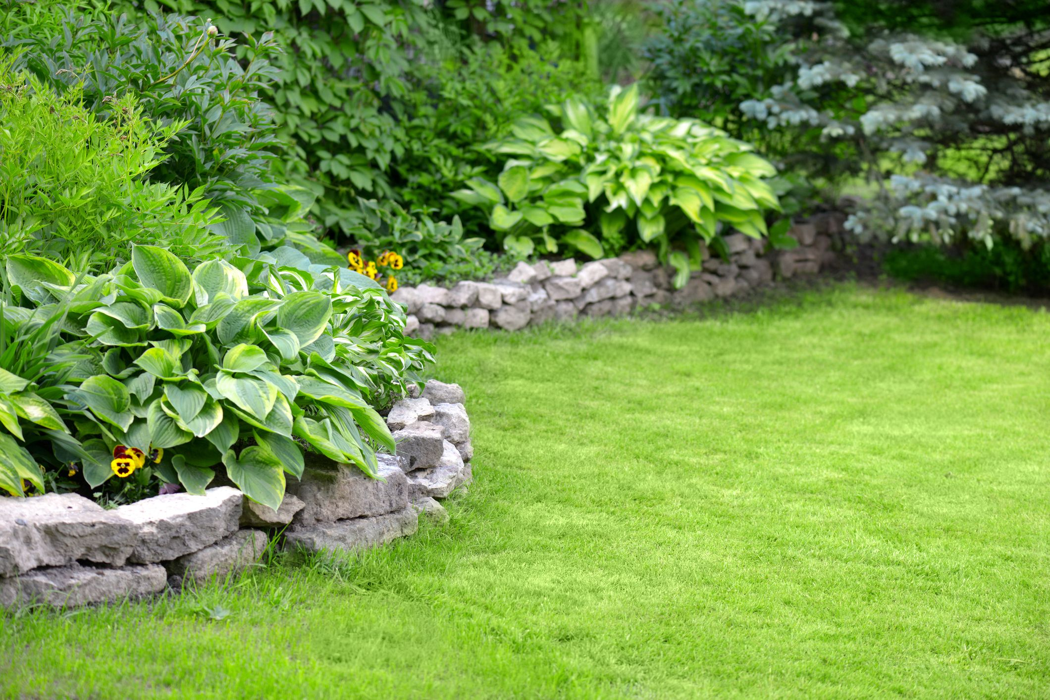 Get Rid Of Crabgr In Your Lawn Naturally