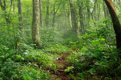 green nature trail in forest