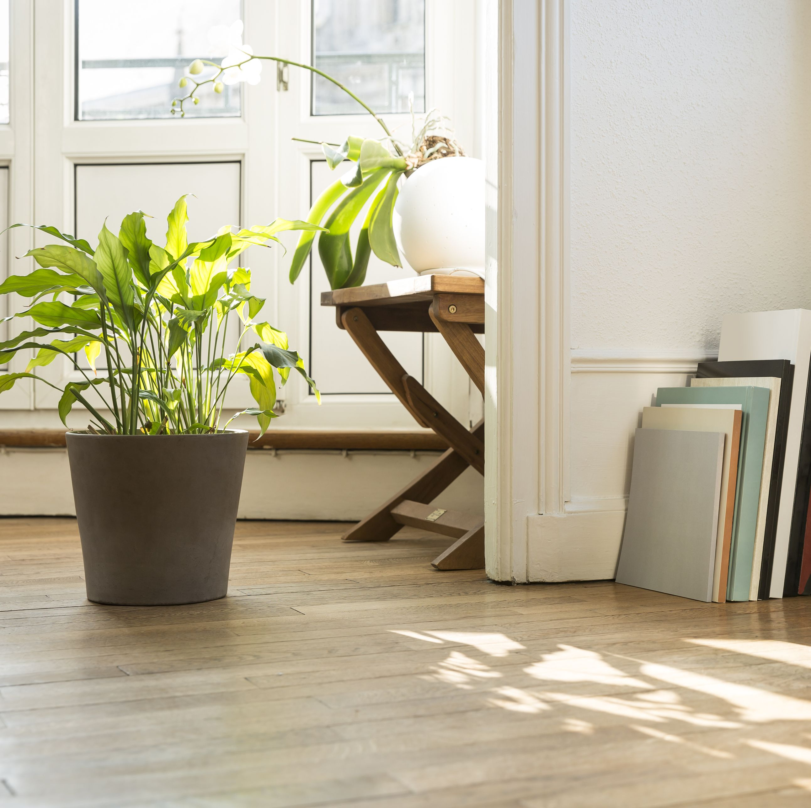 Follow These Two Simple Steps To Save Your Plants (And House) From Bugs