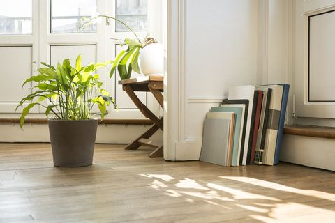 Green plants and art books on parquet floor, Nancy, France