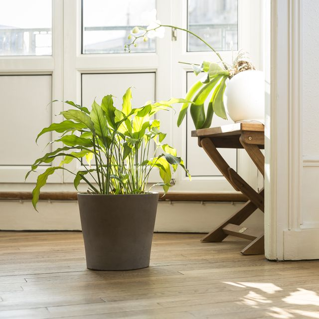 Where To Plants Online Order