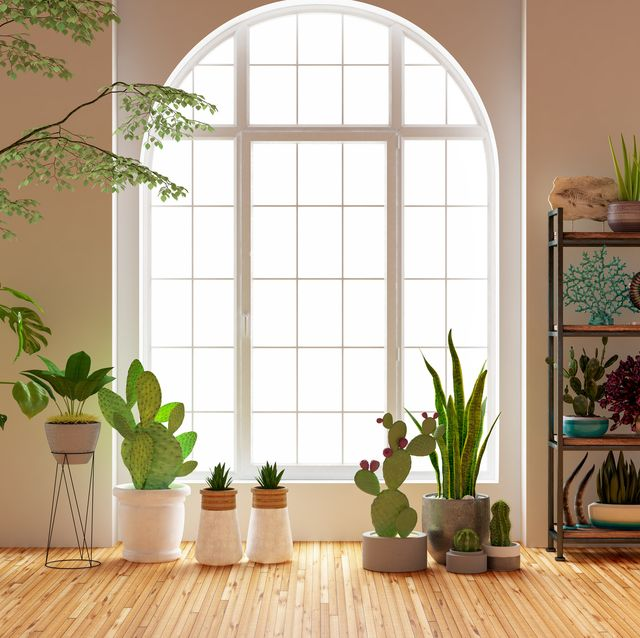 green plants and flowers with window