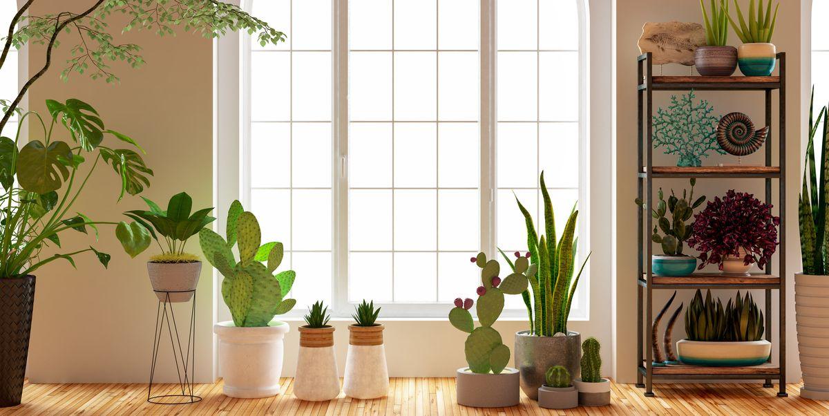 18 Best Indoor Planters Stylish Pots For Indoor Plants
