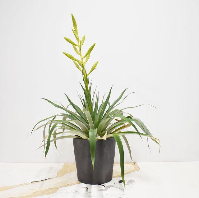 Flower, Flowerpot, Plant, Houseplant, Ikebana, Grass family, Terrestrial plant, Botany, Grass, Floral design,