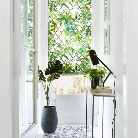 Palm house, botanical style