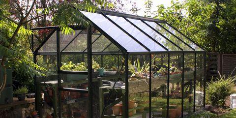 Greenhouse in Back Garden, UK
