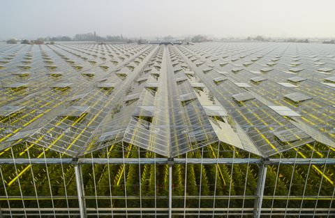 greenhouse in the westland area, part of netherlands with large concentration of greenhouses, elevated view, maasdijk, zuid holland, netherlands