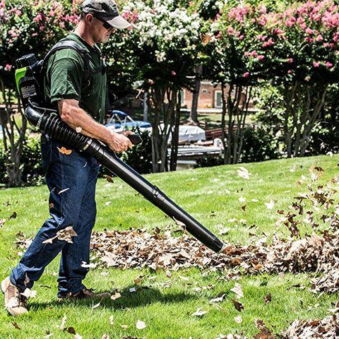 Gardener, Grass, Lawn, Leaf blower, Tree, Outdoor power equipment, Tool, Shrub, Plant,