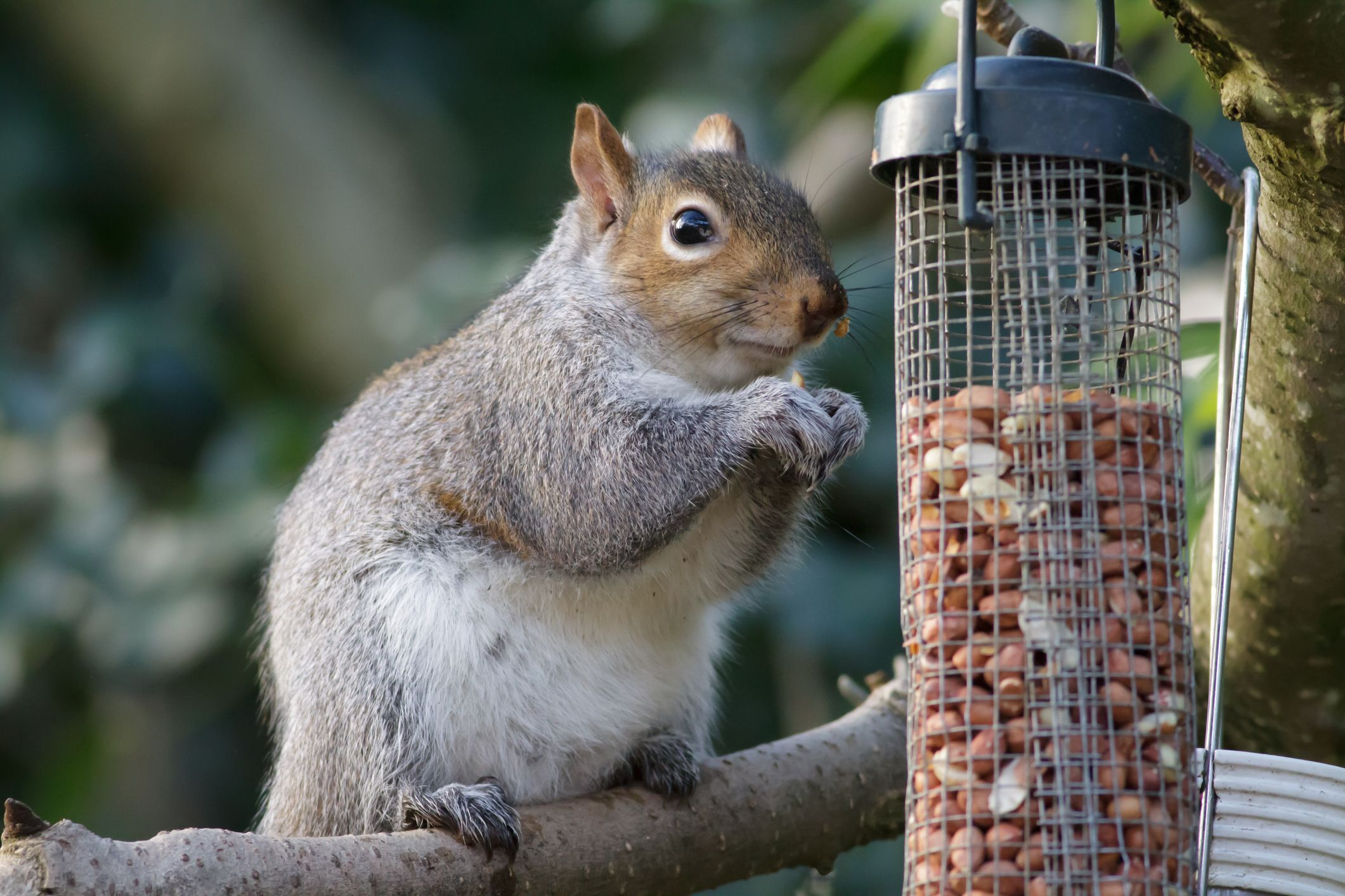6 squirrel-proof bird feeders for your garden