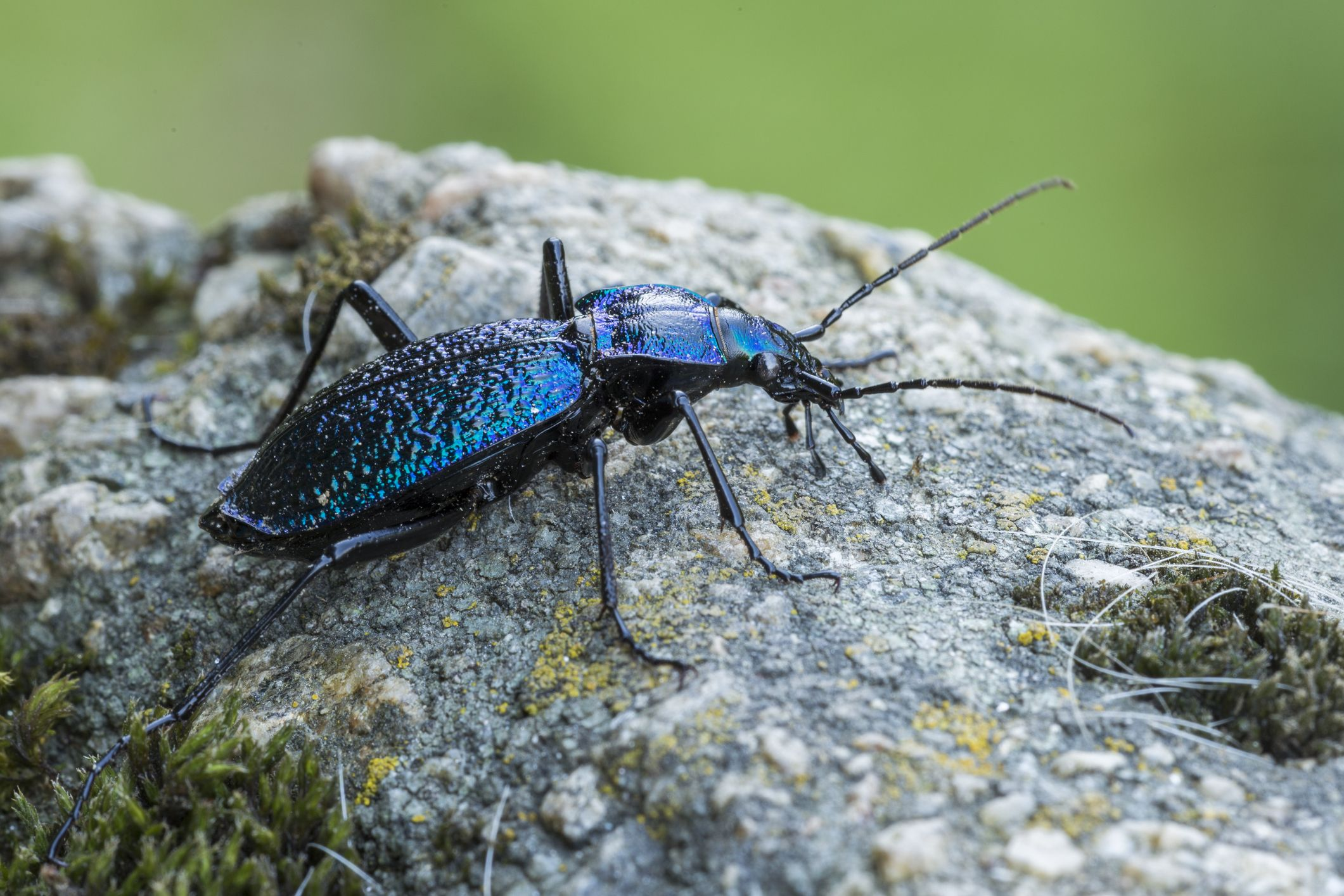 10 Beneficial Insects That Help Plants - Helpful Bugs That Eat Aphids