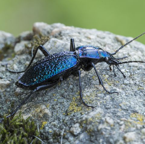10 Beneficial Insects That Will Actually Help Your Plants