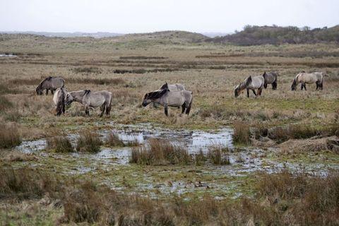 netherlands nature environment horse