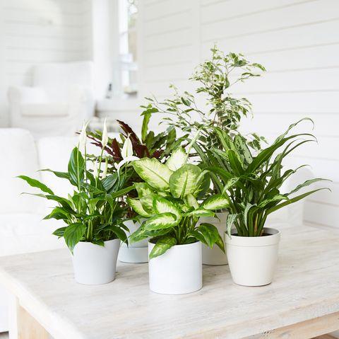 Un ensemble de plantes sur la table