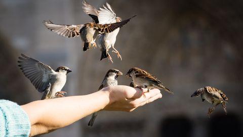 mussen vogels eten brood broodkruimels junkfood ongezond chips darmen darmbacteriën