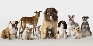 Group portrait of dogs