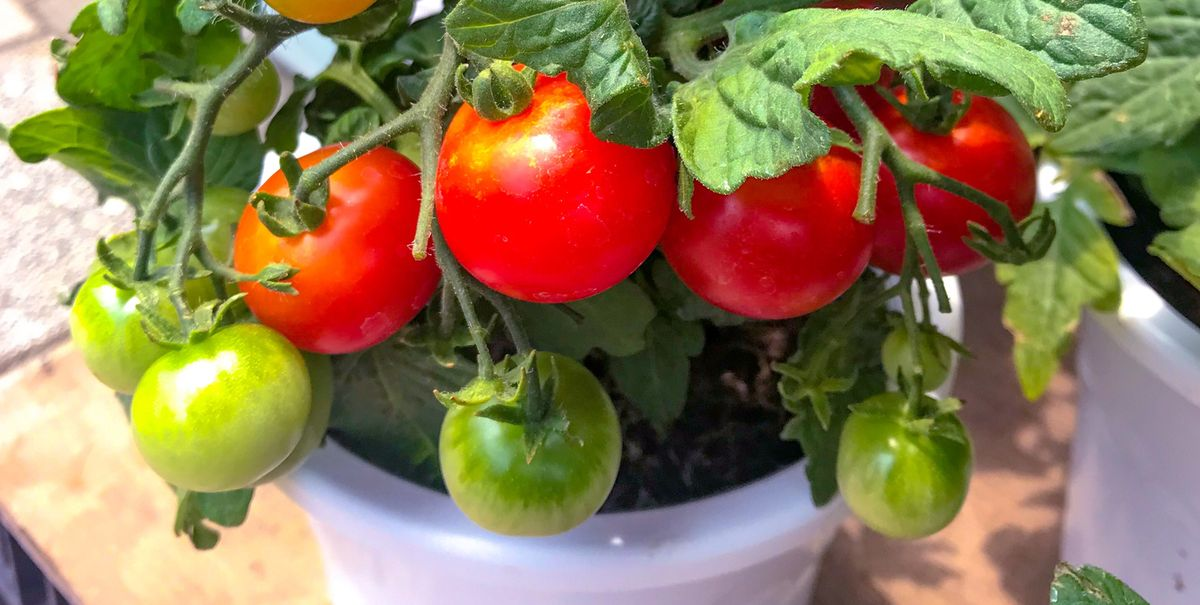 7 fruit and vegetables you can easily grow in pots