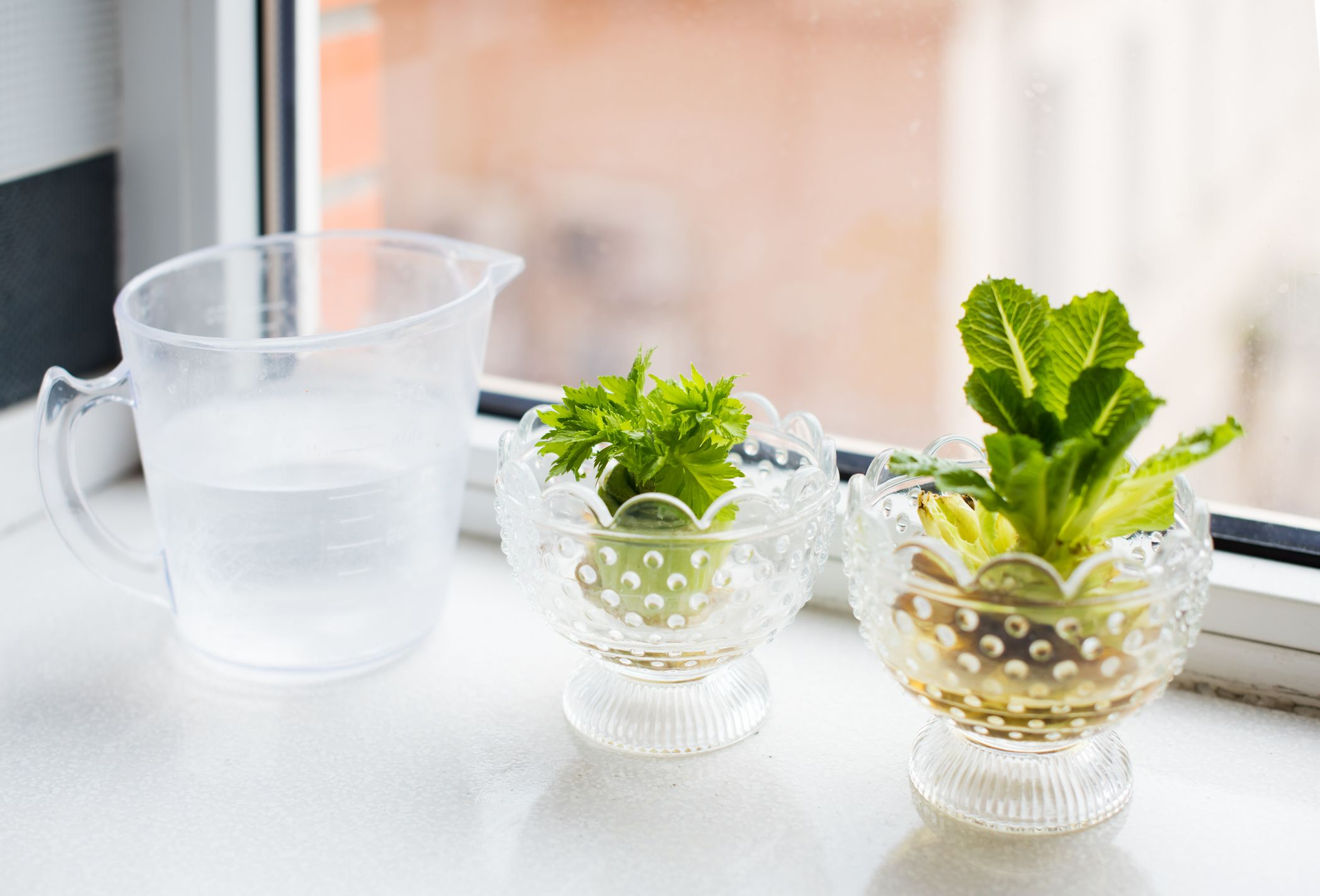 7 vegetables you can easily regrow indoors using kitchen scraps