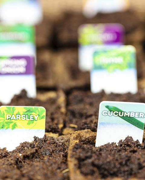 growing plants from seeds in small cardboard pots