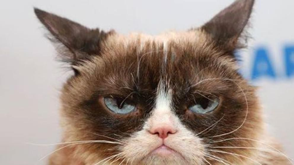 Mark Hamill, 'Star Wars' Se Despide de Grumpy Cat