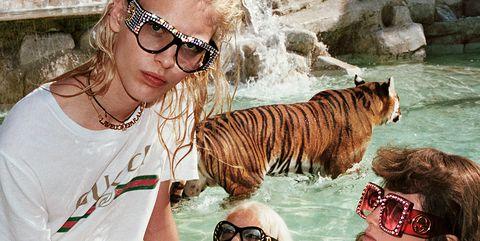 Eyewear, Vision care, Glasses, Vertebrate, Bengal tiger, Tiger, Fashion accessory, Jewellery, Mammal, Summer,