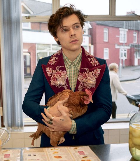 3f3d057b1 Harry Styles Stars in Gucci Men's Tailoring Campaign - Harry Styles ...