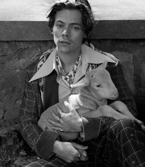 Harry Styles Looks Very Hot Posing With Baby Farm Animals