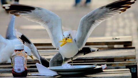 gull lunch