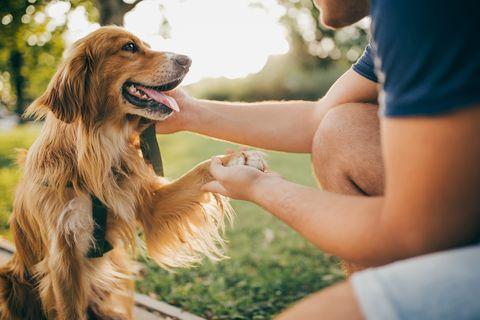 guy and his dog, golden retriever,city park