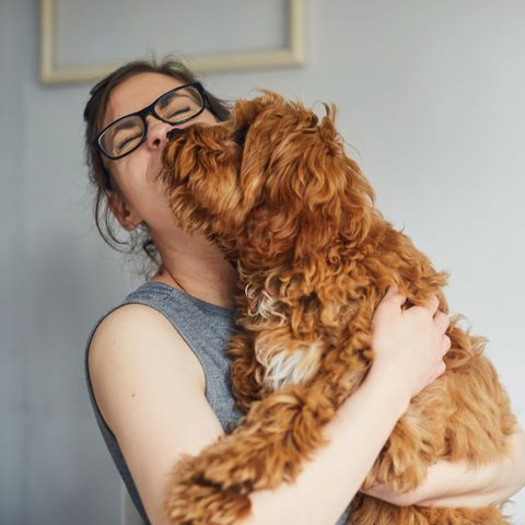 habits to be happy dog
